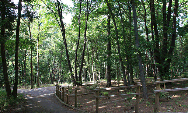 里山型の樹木葬の写真