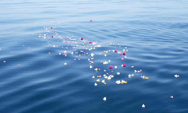 水面に浮かぶ献花の写真