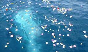 海洋散骨葬のための献花